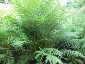 Ferns for blog